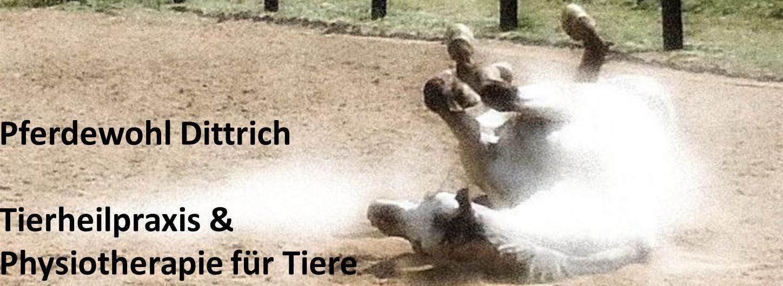 Pferdewohl-Dittrich